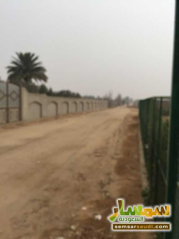 Photo 3 - Land 8,575 sqm For Sale Cairo Alexandria Desert Road Giza