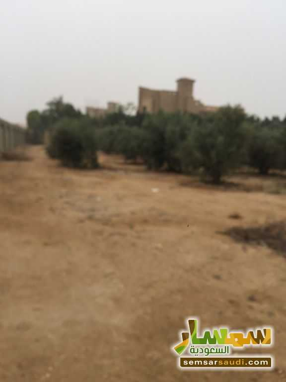 Photo 4 - Land 8,575 sqm For Sale Cairo Alexandria Desert Road Giza