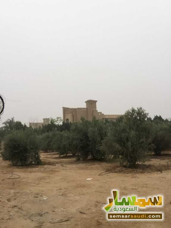 Photo 9 - Land 8,575 sqm For Sale Cairo Alexandria Desert Road Giza