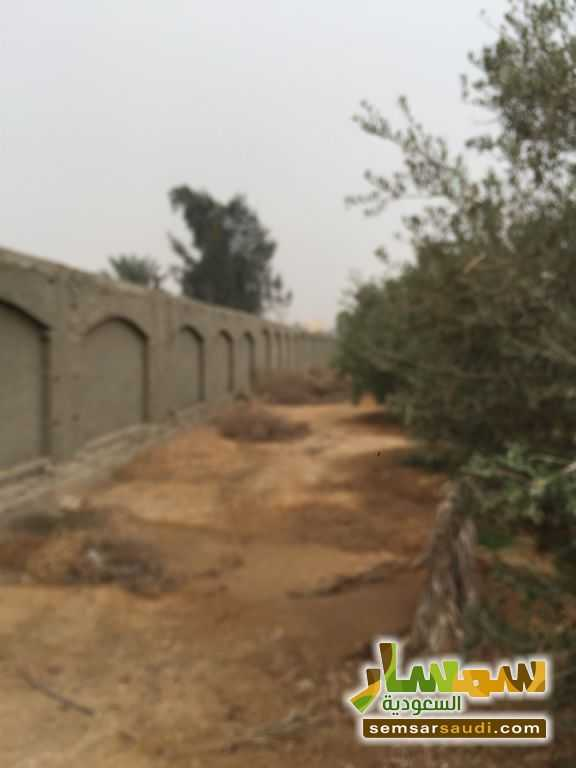 Photo 8 - Land 8,575 sqm For Sale Cairo Alexandria Desert Road Giza