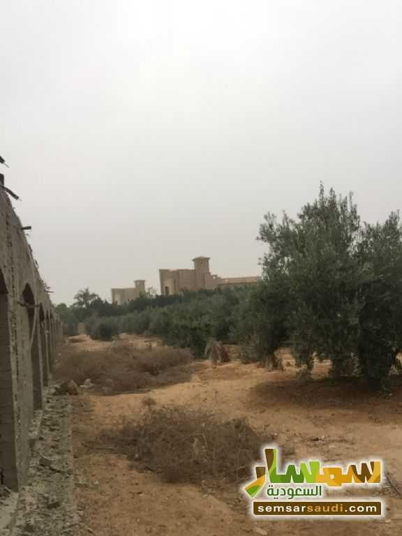 Photo 14 - Land 8,575 sqm For Sale Cairo Alexandria Desert Road Giza