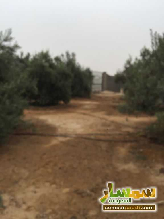 Photo 5 - Land 8,575 sqm For Sale Cairo Alexandria Desert Road Giza