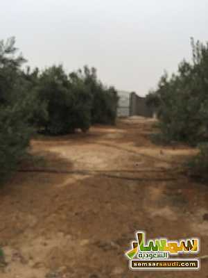 Land 8,575 sqm For Sale Cairo Alexandria Desert Road Giza - 5