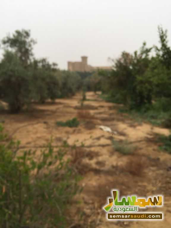 Photo 19 - Land 8,575 sqm For Sale Cairo Alexandria Desert Road Giza