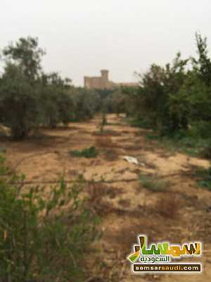 Land 8,575 sqm For Sale Cairo Alexandria Desert Road Giza - 19