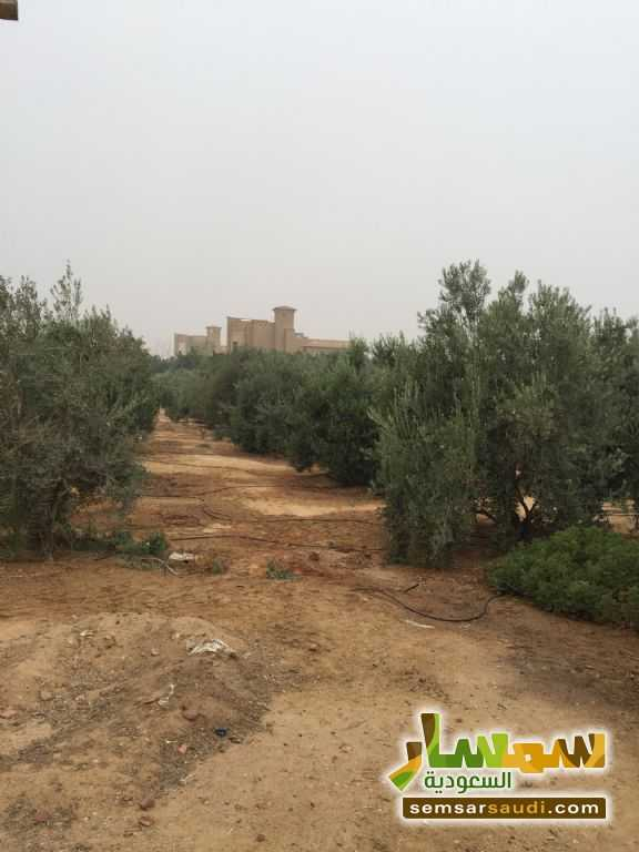 Photo 13 - Land 8,575 sqm For Sale Cairo Alexandria Desert Road Giza