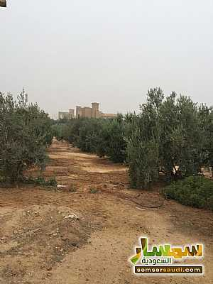 Land 8,575 sqm For Sale Cairo Alexandria Desert Road Giza - 13