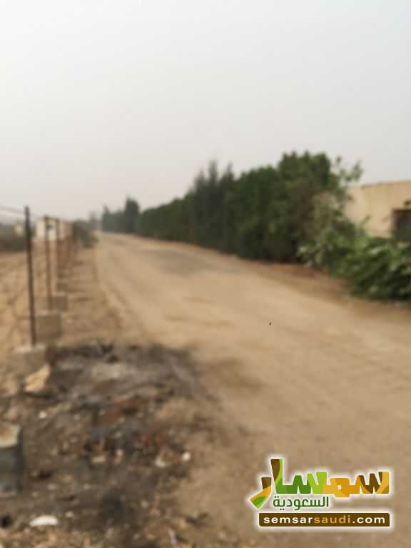 Photo 16 - Land 8,575 sqm For Sale Cairo Alexandria Desert Road Giza