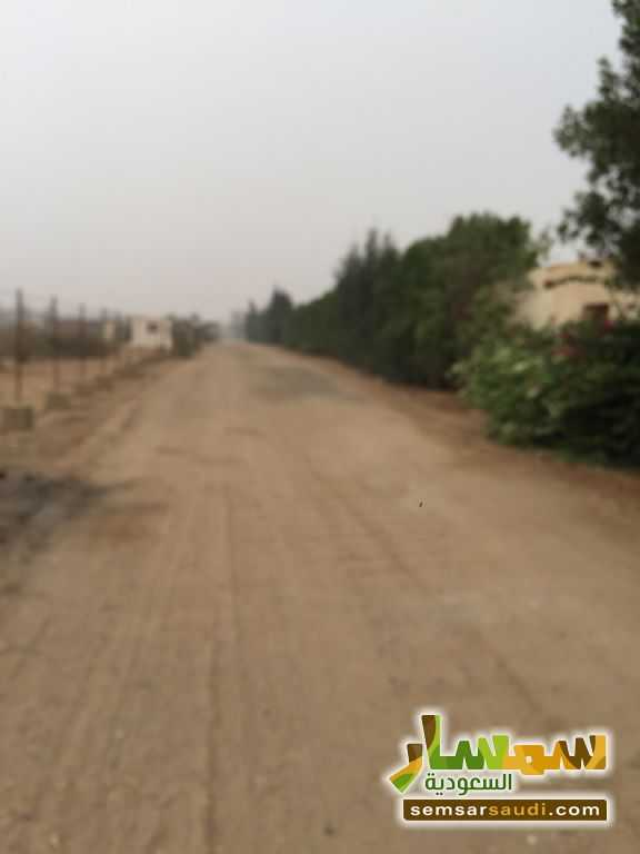 Photo 17 - Land 8,575 sqm For Sale Cairo Alexandria Desert Road Giza