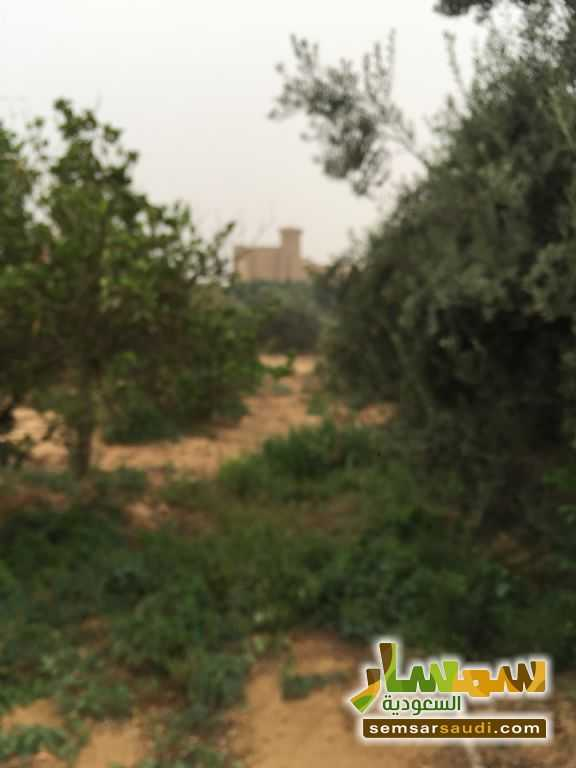 Photo 22 - Land 8,575 sqm For Sale Cairo Alexandria Desert Road Giza