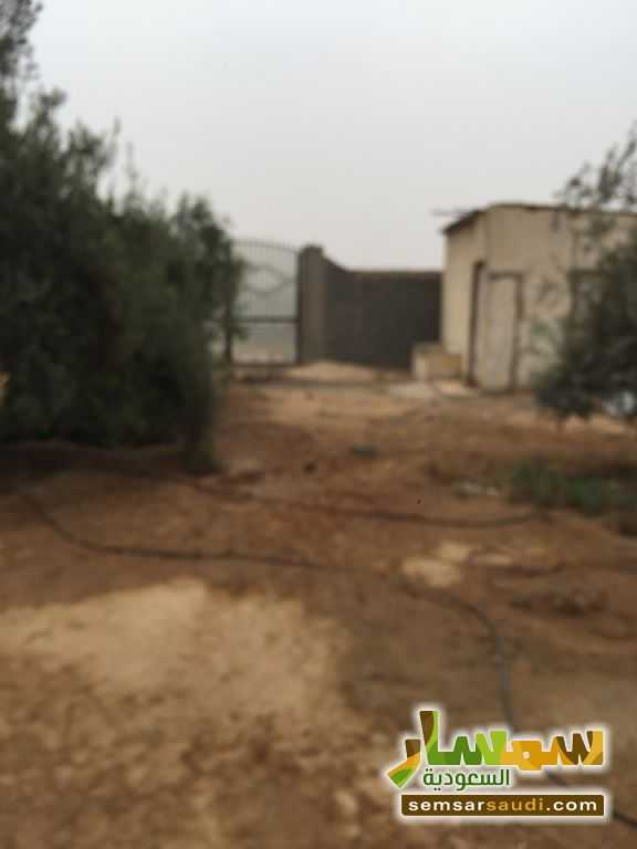 Photo 23 - Land 8,575 sqm For Sale Cairo Alexandria Desert Road Giza