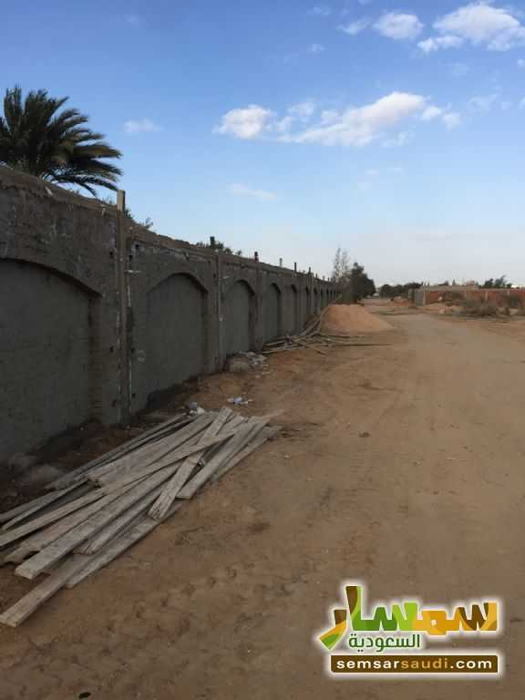Photo 2 - Land 8,575 sqm For Sale Cairo Alexandria Desert Road Giza