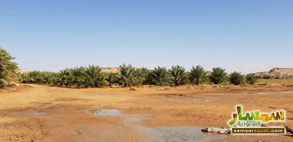 Photo 6 - Farm 500,000 sqm For Sale Al Ghat Ar Riyad
