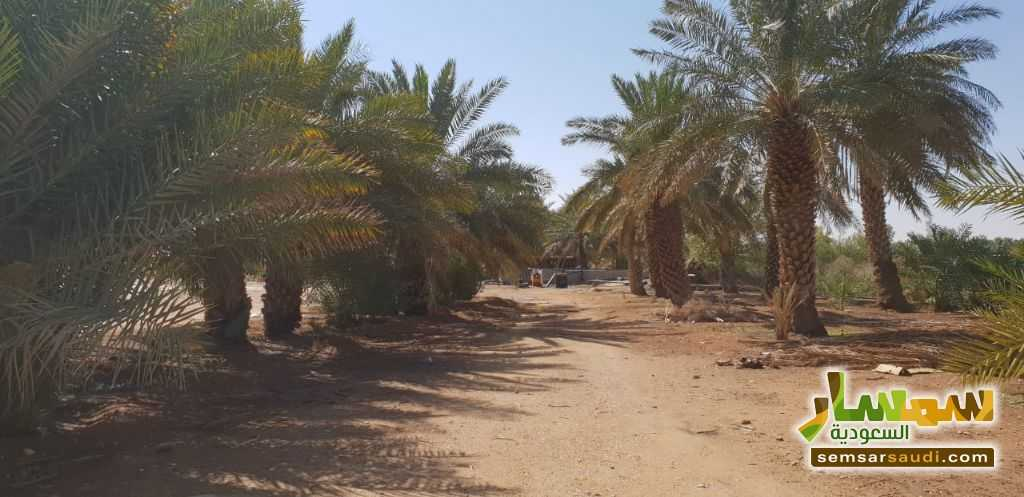 Photo 2 - Farm 500,000 sqm For Sale Al Ghat Ar Riyad