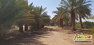 Farm 500,000 sqm For Sale Al Ghat Ar Riyad - 2