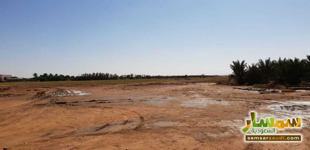Photo 7 - Farm 500,000 sqm For Sale Al Ghat Ar Riyad