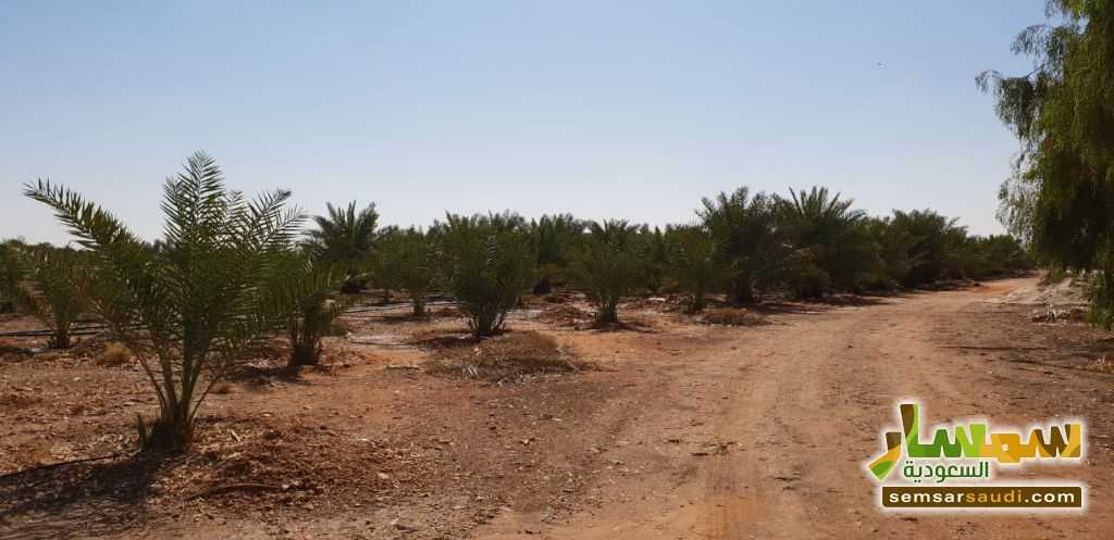 Photo 8 - Farm 500,000 sqm For Sale Al Ghat Ar Riyad