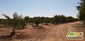 Farm 500,000 sqm For Sale Al Ghat Ar Riyad - 8