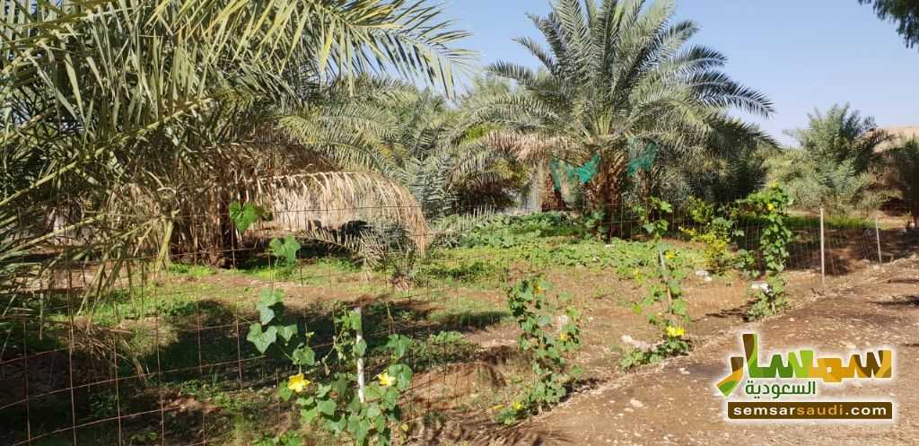 Photo 1 - Farm 500,000 sqm For Sale Al Ghat Ar Riyad